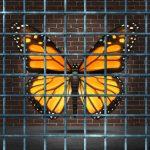 Una farfalla in gabbia simboleggia il blocco della creatività