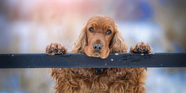 L'addestramento dei cani e l'addestramento degli umani